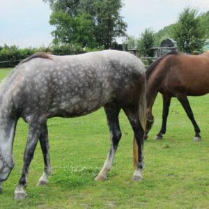 Camping met paarden