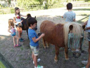 pony's verzorgen 2